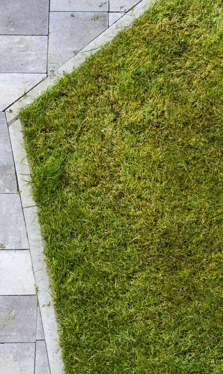 New Beginning Landscape & Remodel LLC Lawn Dethatching