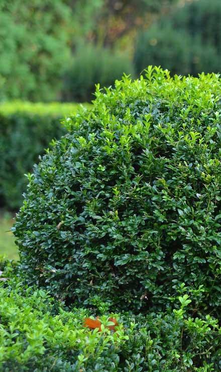 New Beginning Landscape & Remodel LLC Shrubs & Hedges
