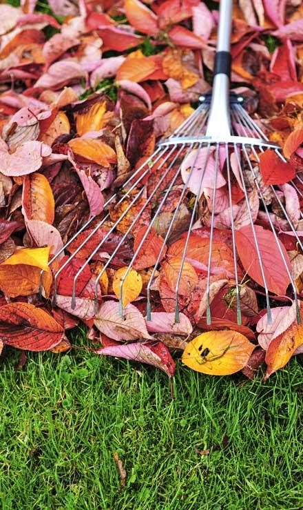 New Beginning Landscape & Remodel LLC Fall Clean Up