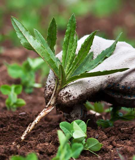 New Beginning Landscape & Remodel LLC Weed Control services